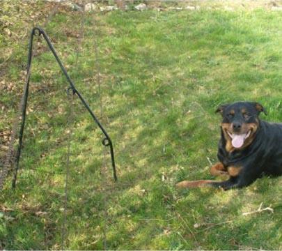 Recinto Elettrico Per Cani.Presentazione Recinzioni Badifarm
